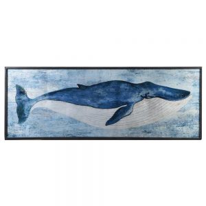 Fin Whale Picture