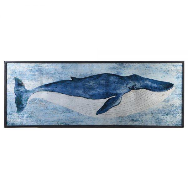 Fin Whale Picture